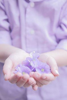 Giving Hands - Lilac Flowers Purple Love, Pastel Purple, All Things Purple, Purple Rain, Pretty Pastel, Shades Of Purple, Light Purple, Purple Hibiscus, Periwinkle