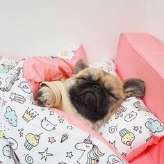 Shop for Pug Lovers ? Shop for Pug Lovers ? Cute Baby Pugs, Baby Animals Super Cute, Cute Little Puppies, Cute Little Animals, Cute Dogs And Puppies, Cute Funny Animals, Baby Dogs, Bulldog Puppies, Terrier Puppies