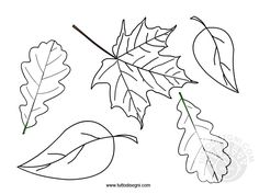 foglie.jpg (794×596)