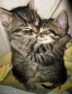 adorable, animal, animals, cat, cats