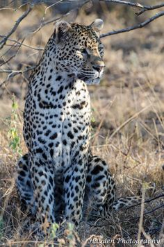 Taken at Mala Mala game reserve in the Sabi Sands South Africa.