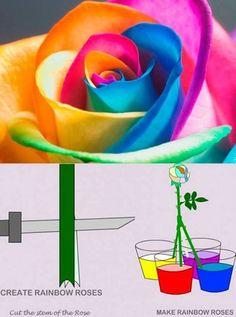 Create Rainbow Roses.....