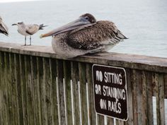 Gulf Shores State Park Pier- No Sitting--or Standing on Rails--HAH!