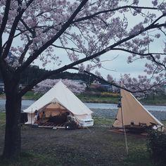 昨日からお花見キャンプに来ています。 ・ 桜も満開 今年はダメかと諦めていたけど、 お天気も回復して最高のお花見キャンプ になりました♩ ・ ・ #vsco #vscocam #outdoors #camp #camping #cherryblossoms #cherryblossomviewingcamp #breakfast #tarp #karidiamond #outingstylejp #hinataoutdoor #camphack取材 #アウトドア #キャンプ #夫婦キャンプ #お花見キャンプ #桜 #朝食 #ノルディスク #アスガルド #タープ #カーリダイヤモンド