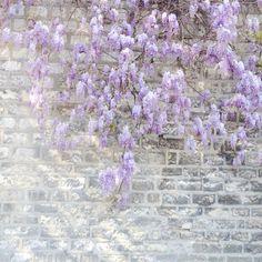 #simplethingsinlife #simplethings #enjoysimplethings #simple #spring #primtemps #flowers #glycines - @leregard_agjc- #webstagram