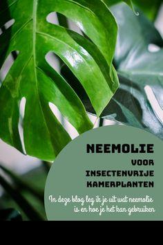 In deze blog leg ik je uit wat neemolie is en hoe je het kan gebruiken, zodat jij ook kan genieten van insectenvrije kamerplanten! #neemolie #insectenbestrijding #natuurlijkebestrijding #planten #kamerplanten #plants #urbanjungle Azadirachta Indica, Plant Leaves, Urban, Plants, Blog, Ideas, Seeds, Blogging, Plant