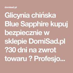 Glicynia chińska Blue Sapphire kupuj bezpiecznie w sklepie DomiSad.pl ✔30 dni na zwrot towaru ✔ Profesjonalne pakowanie ✔ Wygodne sposoby płatności. Wisteria, Blue Sapphire