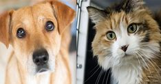 10 Years of Feeding and Caring for Shelter Pets – 10 Pieces of Kibble at a Time!