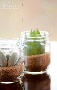 Casa Watkins: World Market Mini Succulent Hanging Jars Knock-off