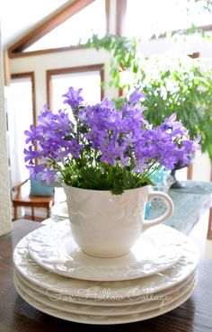 Sweet spring refresher. Pop Campanula in a cup and suacer for a bright spot in the kitchen.