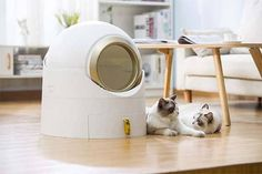 Litter Box, Cool Gadgets, Inventions, Washing Machine, Home Appliances, Watch Video, Innovation, Campaign, Channel