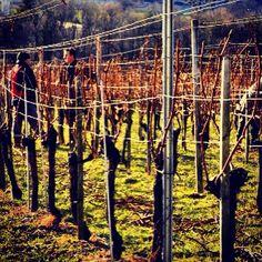 Seen on #winetour in #BündnerHerrschaft, #Graubünden, #Switzerland. www.facebook.com/WTSwitzerland - www.wine-tours.ch #pinotnoir #culinarytrips