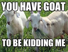Community Post: 14 Goat Quotes For Every Occasion