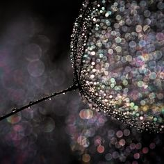 [Photo Tips] #HowTo: Create Beautiful Bokeh Images by Ursula Abresch via @500px