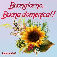 Holiday Day, Bellisima, Good Morning, Google, Fruit, Plants, Sunday, Italy, Wallpapers