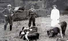 Farmers: Jack Newton, left, and his sister Audrey, right, pictured looking after their pigs at Grange Farm