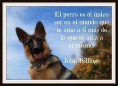 """#perro, #perros, #frases, #motivación, #reflexión, """"pensamientos, #amor #PensamientosYFrases"""