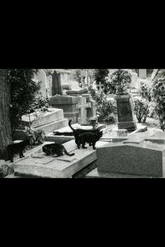 Black cats + cemetery