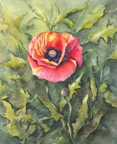 """Poppies Single "" 8"" x 10"" Watercolor Original.  Christy Sheeler Art.  The beauty of summer's garden captured for all seasons.  Artwork inspired by nature.  Pin now and shop later.  Click now to see more!"
