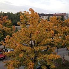 """Die Einen sagen Herbst, ich meine """"Winter is comming"""""""