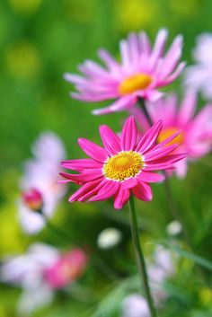 You are as beautiful As the flower Flower Beds, My Flower, Flower Art, Flower Power, Beautiful Flowers Garden, Amazing Flowers, Flower Images, Flower Pictures, Flowers For You