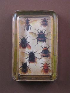 Bee Botanical Illustration Rectangle Glass Paperweight.