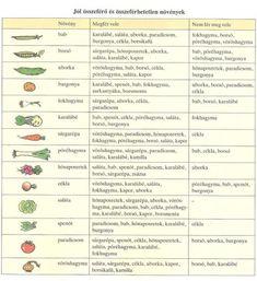 növénytársítások Horticulture, Plants, Gardening, Google, Home, Garden Planning, Lawn And Garden, Plant, Planets