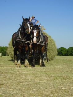 shire horses - farm life Woodland Craft Devon