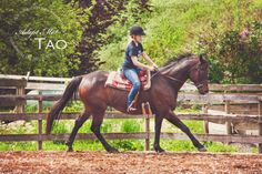 Tao (Tens are Wild) is a 15 year old 16.2hh Dark Bay Thoroughbred Gelding who is currently available for adoption at Circle F Horse Rescue.  If you would like to learn more about him be sure to check out the adoption video below  contact circle f horse rescue at www.circlef.ca\ https://www.youtube.com/watch?v=RqZbiKd4tew  ©paws and tails pet photography 2013 http://www.pawsandtailspetphotography.com