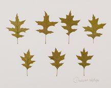 Red Oak Leaf,dried, pressed, framed  www.urbangardenbotanicals.com