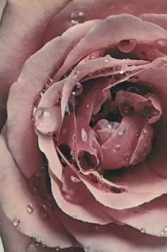 Lush pink flower, Irving Penn, 1971 #flower #photography