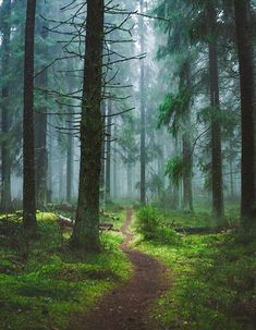 🇫🇮 Path in the forest (Finland) by Niilo Isotalo cr. Forest Trail, Forest Path, Tree Forest, Summer Aesthetic, Travel Aesthetic, Belleza Natural, Garden Styles, How To Take Photos, Painting On Wood