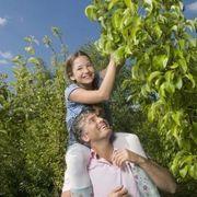 Zone 8 Fruit Tree List   eHow