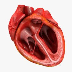 3Ds Human Heart Medically Accurate - 3D Model