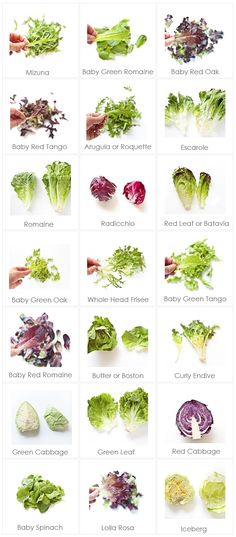 The ultimate list of different types of lettuce