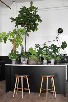 Plant SPA at Trendensers Studio Spinneriet - Image from Trendenser.se