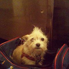 LOOK! We love Krysten Ritter's little dog!