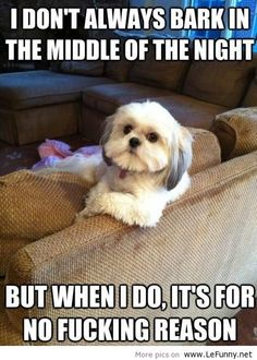 animal funny quotes - Google Search