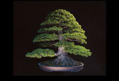 数百年が刻まれた歴史的「盆栽」の姿がヤバすぎる Jonathan Singer | DDN JAPAN