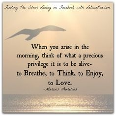 Think of what a precious privilege it is to be alive.  #morning #appreciation #love