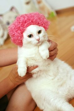 Wig cat #Funny #Cat