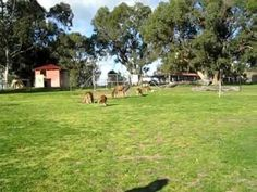 While on a visit to Perth in Australia in 2010 a friend of mine took us to visit a magical area called: Marapan Wild Life Park which was located a short dist. Perth, Brisbane, Melbourne, Sydney, Kangaroos, Singapore, Dolores Park, Wildlife, Southern
