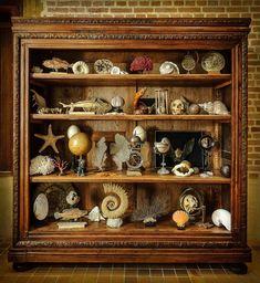 Cabinet de curiosités de Leonard de Vinci – Noblesse & Royautés Curiosity Cabinet, Curiosity Shop, Shell Display, Cabinet Of Curiosities, Vintage Room, Cabinet Decor, Gothic House, Wood Cabinets, The Beach