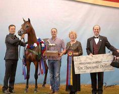 Arabian Horse - Soul of Marwan AS - US Nationals Champion Junior Colt