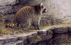 Wild Animal Paintings | ... 1988, Robert Bateman Paintings, Art Painting, Wild Animals Paintings