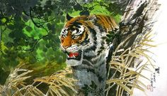 (North Korea) Tiger by Gang Hak cheol (1974-   ).