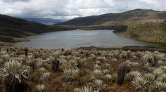 Parque Nacional Natural Sumapaz | Parques Nacionales Naturales de Colombia