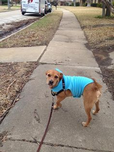 Rusty sporting his cool blue jacket. Taken by sitter Ruth.