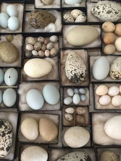 My collection of bird eggs. Make ceramic eggs Egg Nest, Nature Collection, Nature Table, Displaying Collections, Taxidermy, Science And Nature, Wabi Sabi, Bird Feathers, Beautiful Birds