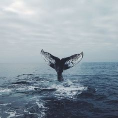 A whale of a tail.